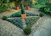 KNOT Garden with GRAVEL, PEBBLES, Purple SAGE, Oregano, THYMUS 'Silver POSIE' AND Box PYRAMID IN A TERRACOTTA Pot IN THE CENTRE