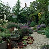 Schalen mit Sempervivum und Steinkraut im Sommergarten