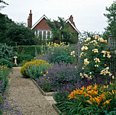 Blau-gelbes Beet mit Rose 'Graham Thomas' (Englische Rose), Hemerocallis (Taglilien), Salvia nemorosa (Steppensalbei, Ziersalbei), Nepeta (Katzenminze)