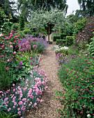 Pyrus salicifolia 'Pendula' (Weiden-Birne), Dianthus 'Rose Du Mai' (Nelke), Allium christophii (Zierlauch) 9093.10 + 9093.6 +