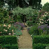 Sommergarten mit Pyrus salicifolia 'Pendula' (Weiden-Birne) Dianthus 'Rose du Mai' (Nelke), Allium christophii (Zierlauch)