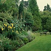 Beet mit Kniphofia 'August Yellow' (Fackellilie), Macleaya cordata (Weißer Federmohn) und Salvia (Salbei)