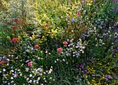 Wildblumenbeet mit Sedum acre (Fetthenne), Campanula rotundifolia (Glockenblume), roter Baldrian, Veronic Spicata (Ehrenpreis), wilder Thymian, Linaria vulgaris (Leinkraut)
