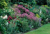 Geranium maderense (Madeira-Storchschnabel), G. Psilostemon-Hybride 'Ann Folkard' (Armenischer Storchschnabel), Rosa (Rosen), Lilium (Lilien), Penstemon 'Blue Springs' (Bartfaden) , Euphorbia (Wolfsmilch) 11359.10 +