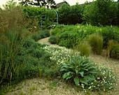 Stipa gigantea (Federgras), Helianthemum (Sonnenröschen), Verbascum olympicum (Königskerze), Stipa tenuissima