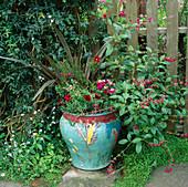 CERAMIC Pot with PHORMIUM, Salvia, Stock, PANSIES & BORONIA. Designer: KEEYLA MEADOWS, San FRANCISCO