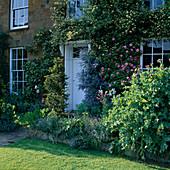 BEAUTIFUL Old Front DOOR SURROUNDED by CLIMBERS: Rosa BANKSIAE 'LUTEA' (Yellow), Rosa 'ZEPHIRINE DROUHIN' (Pink) & Ceanothus 'CASCADE'. Designer: RUPERT GOLBY.