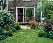 City Garden - LOOKING BACK TO THE HOUSE with LAWN, Patio, CHOISYA TERNATA, Tulip 'China Pink', Red Tulip 'COULEUR Cardinal', Box BALLS, STIPA ARUNDINACIA DESIGN: CATHY STEWART