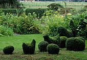 Kunst mit Buxus - Buchs-Topiary : Formschnitte Hühner und Eier ,