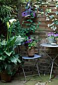 Lilien, Zantedeschia aethiopica, Petunien, Campanula (Glocken- blume) und Vogelhäuschen