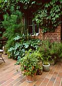 Gepflasterte Terrasse mit Acanthus mollis, Fenchel, Lavendel, Stoechas an der Wand