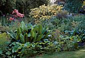 BOG Garden,COTON MANOR, NORTHAMPTONSHIRE: Rhododendron luteum, LYSICHITON AMERICANUM, PELTIPHYLLUM PELTATUM