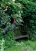 Verborgener Sitz im Kräutergarten, Pavillon überwachsen mit Kletterrose 'New Dawn' , Rosa glauca (Blaue Hechtrose), Akebia quinata (Klettergurke)