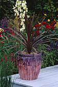 THE CITROEN Garden, HAMPTON Court 96/ Designer DAVID STEVENS FIBREGLASS Pot with Cordyline by Christian DAY LTD