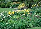 Narcissus 'Triandus', 'Thalia', 'Unsurpassable', Tulipa (Tulpen) Euonymus fortunei 'Radicans' (Spindelstrauch)