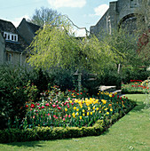 VIEW TOWARDS THE ABBEY CHURCH with Tulip & ROSE BORDER AND BETULA PENDULA 'YOUNGII' . THE ABBEY HOUSE, WILTSHIRE.