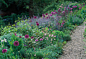 VIEW Along GRAVEL PATH of Peach Walk with ALLIUM 'Purple Sensation' AND Nepeta 'Six HILLS GIANT'. HADSPEN GARDENS, SOMERSET.