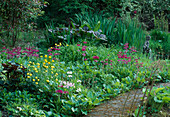 Trollius (Trollblumen), Candelabra Primeln, Hosta (Funkie) Photinia 'Red Robin' (Glanzmispel), Amelanchier (Felsenbirne) neben Teich
