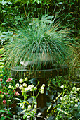 Metal Container PLANTED with FESTUCA GLAUCA by DAVID ROSEWARNE AND Magie GRAY / CHELSEA