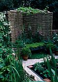 Apothekergarten mit Sichtschutz aus geflochtenen Zweigen, Digitalis (Fingerhut), Bank mit Thymian (Thymus), Buxus (Buchs - Kugeln) in Töpfen, Weg mit Muschel-Kies