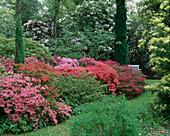 Japanische Azaleen, Rhododendron 'Beauty of Littleworth', Pieris / Schattenglöckchen im Schatten unter Bäumen