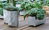 Gestutzter Lavendel (Lavandula), Artemisia 'Lambrook Silver' (Edelraute) und Artischocke (Cynara scolymus) in fahrbaren Zink-Behältern auf Dachgarten