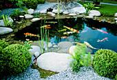 Japanischer Teich mit Koi, Kies, Natursteine, Findlinge, Buxus (Buchs-Kugeln)