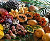 EXOTEN Aussäen:VON oben links: Ananas,Melone,