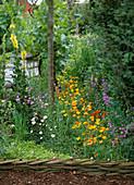 Wildblumenbeet: Lychnis / Kuckuckslichtnelke, Eschscholzia