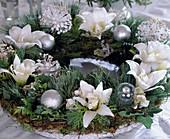 Weihnachtlicher Kranz: Hippeastrum / Amaryllis, Kiefernzweige, Hedera, Thuja