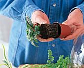 Flaschengarten Bepflanzen
