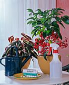vorbeugender Pflanzenschutz: 1 Aspirin IN