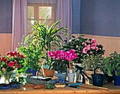 Zimmerpflanzenpraxis: BEGONIA, PTERIS, DRACAENA