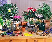 Zimmerpflanzenpraxis: Hoya, SAINTPAULIA, ROSE