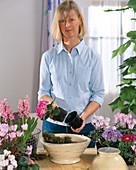 Schale mit Frühlingsblumen bepflanzen