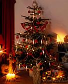 ABIES nordmanniana, NORDMANNSTANNE als Weihnachtsbaum