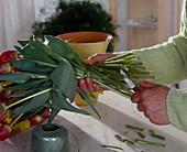 Tulpenstrauß: Stengel frisch anschneiden