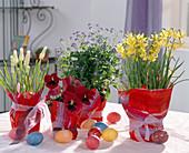Oster-Arrangement mit Narzissen, Vergißmeinnicht und Traubenhyazinthen