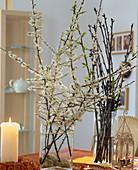 Prunus spinosa / Schlehenzweig, Prunus / Kirschzweig als Barbarazweig