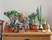 Crassula, GASTERIA, Mammillaria, PACHYPODIUM, Echeveria