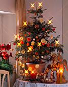 ABIES KOREANA als LEBENDIGER Weihnachtsbaum
