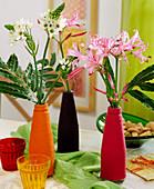 Blüten von Milchstern und Guernseylilie in Flaschen