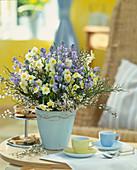 Narcissus-Hybr. 'Minnow', Scilla hyacinthoides / Hasenglöckchen, Cytisus / Ginst