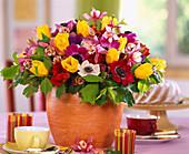 Tulipa-Hybr. 'Kareol', Anemone coronaria / Kronenanemone, Aquilegia 'Spring Magi