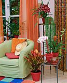 Afro-Look mit Miltonia / Orchidee, Hoya linearis / Wachsblume,