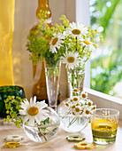 Argyranthemum / Margerite, Anthemis arvensis / Hundskamille,
