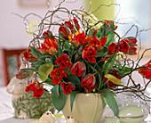 Tulipa-Hybr. 'Arma', Corylus / Korkenzieherhasel