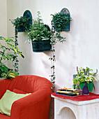 Wandbehälter aus Blech mit Ceropegia / Leuchterblume,
