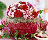 Korb mit Blumenstrauß aus Dianthus barbatus / Bartnelke,