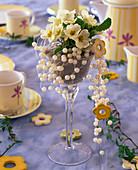Primula acaulis / Kissenprimel im Weinglas mit Vogelsand